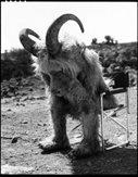 goatboy54