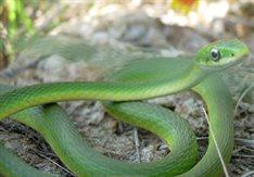 Snake30