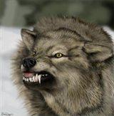 wolfnwagner
